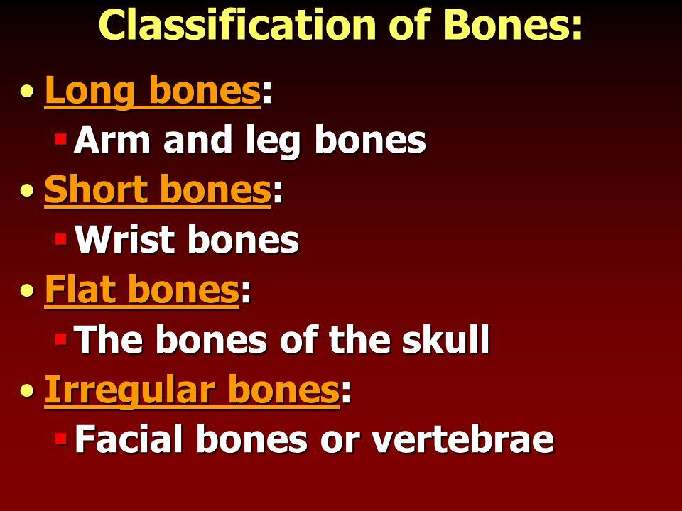 Classification of Bones: Long bones:Long bones:  Arm and leg bones Short bones:Short bones:  Wrist bones Flat bones:Flat bones:  The bones of the skull Irregular bones:Irregular bones:  Facial bones or vertebrae