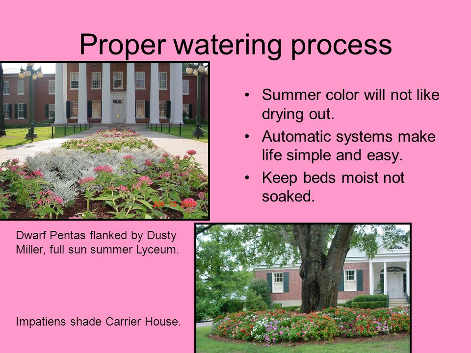 Proper watering process Summer color will not like drying out.