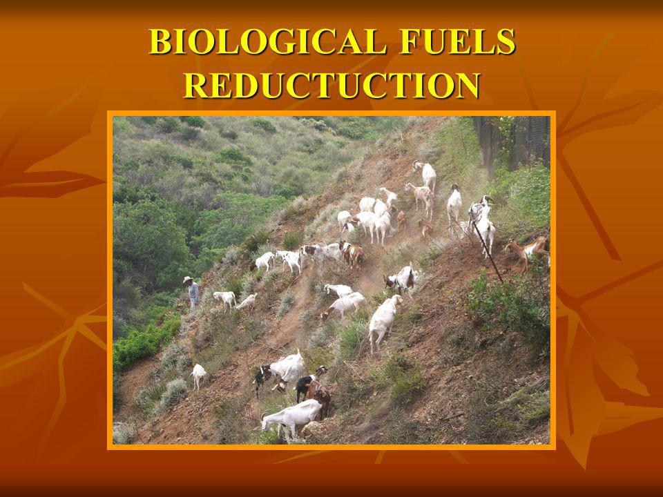 BIOLOGICAL FUELS REDUCTUCTION
