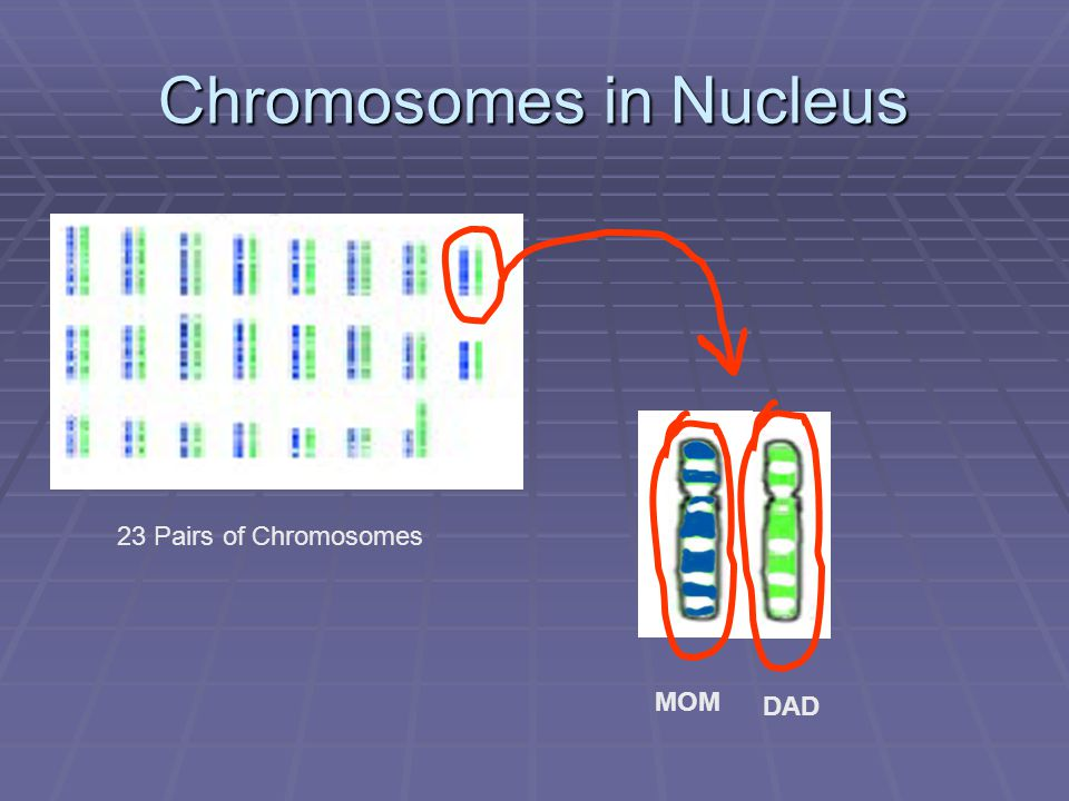 Chromosomes in Nucleus 23 Pairs of Chromosomes MOM DAD