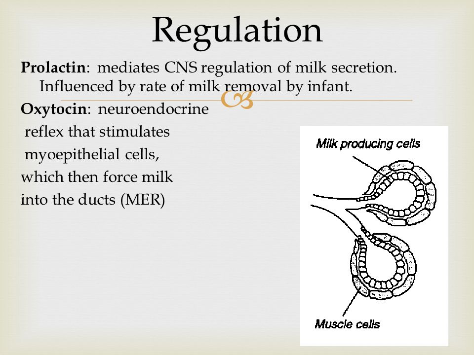  Prolactin : mediates CNS regulation of milk secretion. Influenced by rate of milk removal by infant. Oxytocin : neuroendocrine reflex that stimulate