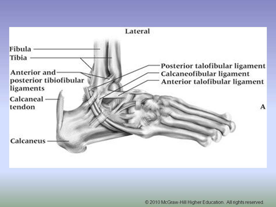 Tendinitis –Cause of Injury Singular cause or collection of mechanisms –Footwear, mechanics, trauma, overuse, limited flexibility –Signs of Injury Pain & inflammation Crepitus Pain with AROM & PROM –Care Rest, NSAIDs, modalities Orthotics for foot mechanic