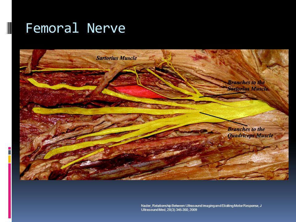 Femoral Nerve Nader, Relationship Between Ultrasound Imaging and Eliciting Motor Response, J Ultrasound Med, 28(3):345-350, 2009
