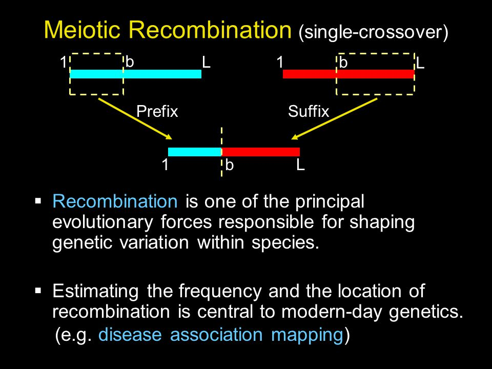 Meiotic Recombination (single-crossover) PrefixSuffix  Recombination is one of the principal evolutionary forces responsible for shaping genetic variation within species.