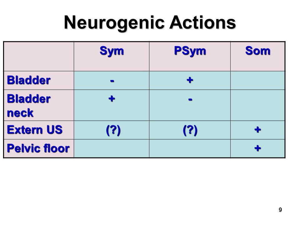 9 Neurogenic Actions SymPSymSom Bladder-+ Bladder neck +- Extern US (?) (?)(?)+ Pelvic floor +