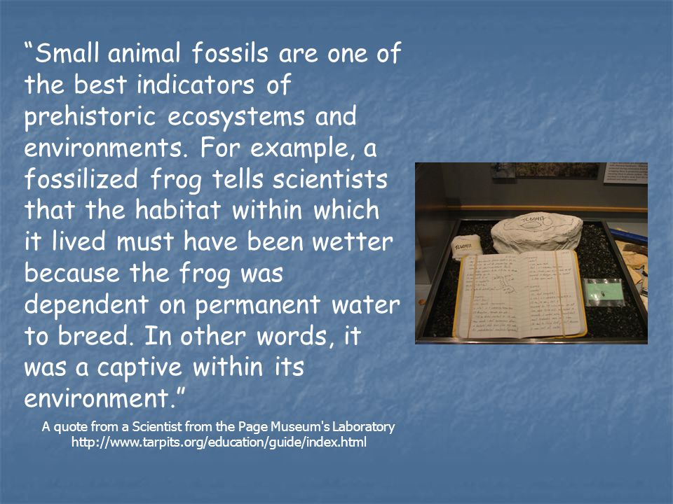 Small animal fossils are one of the best indicators of prehistoric ecosystems and environments.
