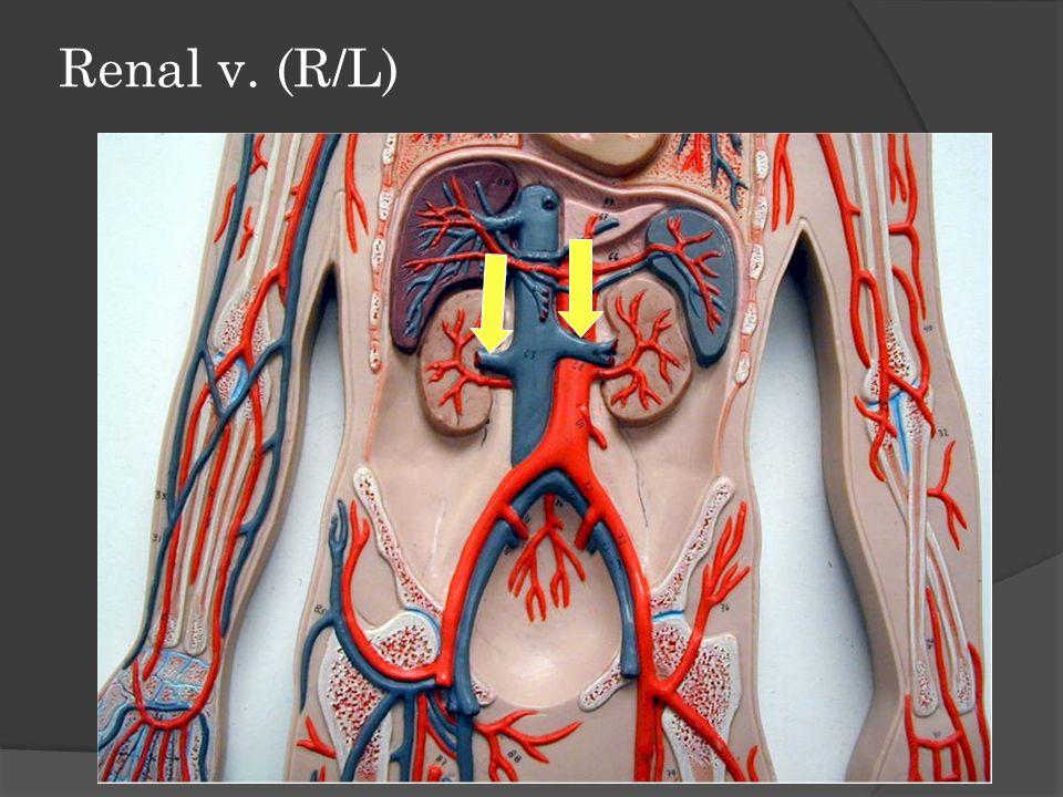 Lower Limbs & Pelvis