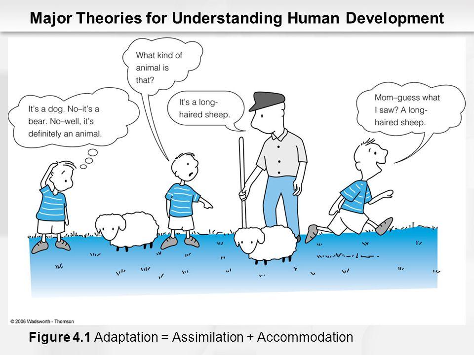 Major Theories for Understanding Human Development Figure 4.1 Adaptation = Assimilation + Accommodation