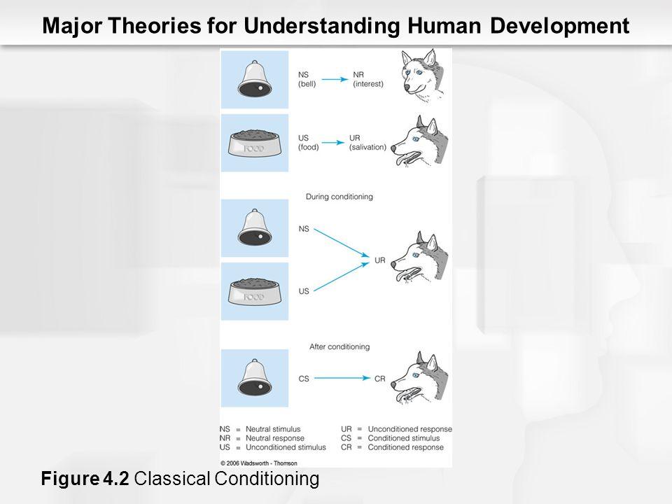Major Theories for Understanding Human Development Figure 4.2 Classical Conditioning