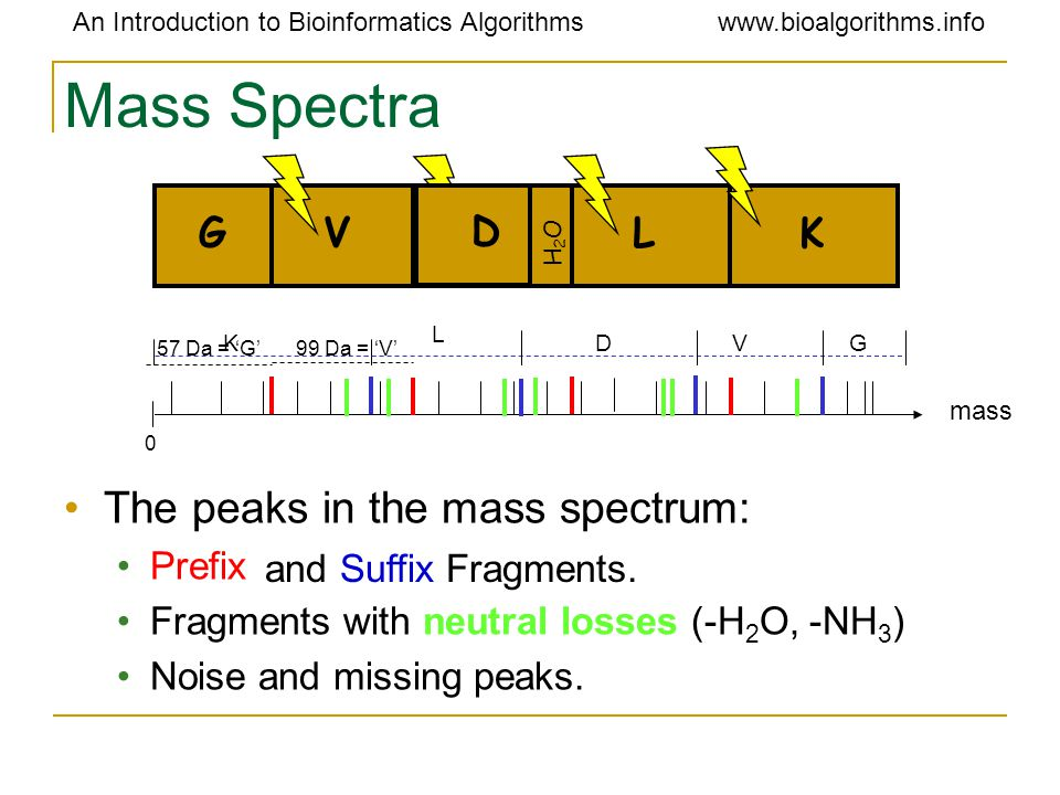 An Introduction to Bioinformatics Algorithmswww.bioalgorithms.info Mass Spectra GVDLK mass 0 57 Da = 'G' 99 Da = 'V' L K DVG The peaks in the mass spectrum: Prefix Fragments with neutral losses (-H 2 O, -NH 3 ) Noise and missing peaks.