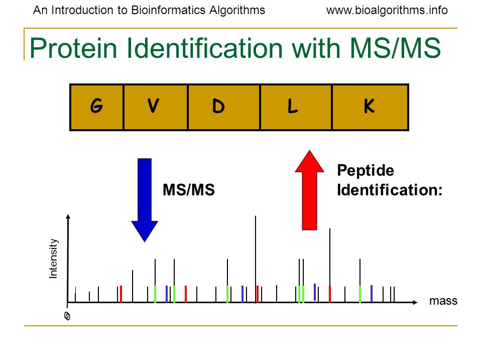 An Introduction to Bioinformatics Algorithmswww.bioalgorithms.info Protein Identification with MS/MS GVDLK mass 0 Intensity mass 0 MS/MS Peptide Identification: