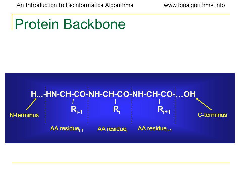 An Introduction to Bioinformatics Algorithmswww.bioalgorithms.info Protein Backbone H...-HN-CH-CO-NH-CH-CO-NH-CH-CO-…OH R i-1 RiRi R i+1 AA residue i-1 AA residue i AA residue i+1 N-terminus C-terminus