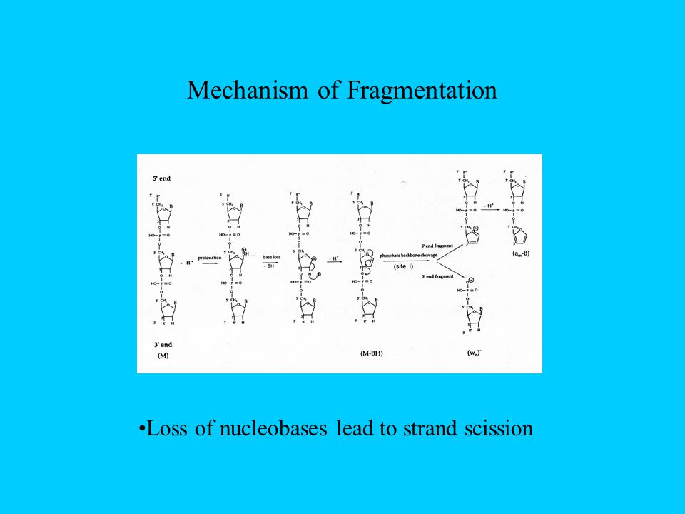 Mechanism of Fragmentation Loss of nucleobases lead to strand scission