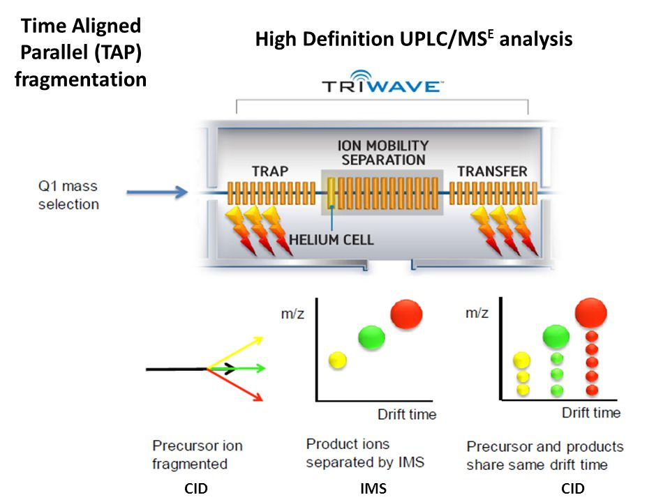 High Definition UPLC/MS E analysis Time Aligned Parallel (TAP) fragmentation CID IMS