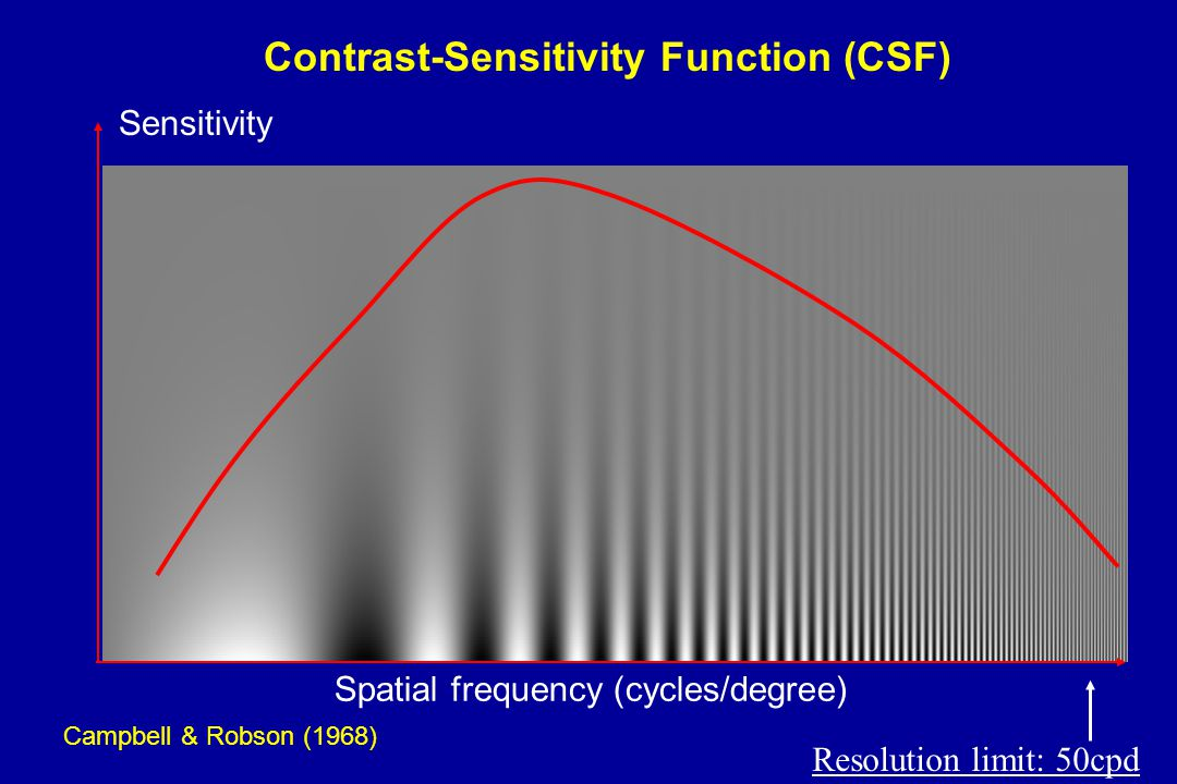 Campbell & Robson (1968) Spatial frequency (cycles/degree) Sensitivity Contrast-Sensitivity Function (CSF) Resolution limit: 50cpd
