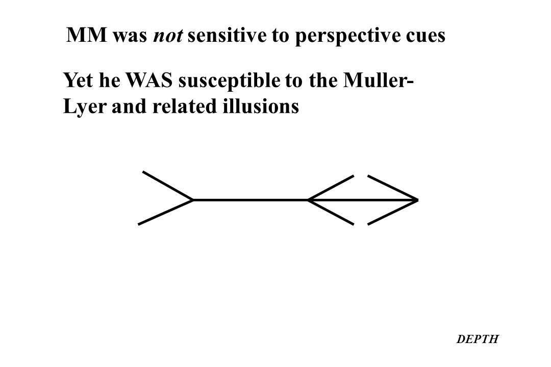 MM was not sensitive to perspective cues DEPTH Yet he WAS susceptible to the Muller- Lyer and related illusions
