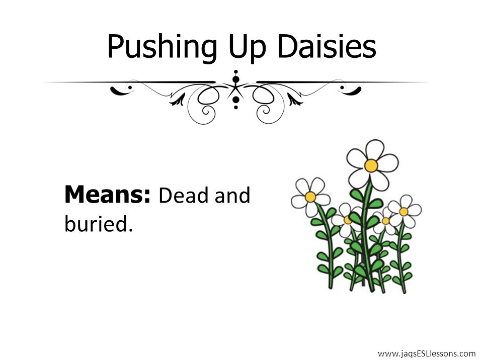 Pushing Up Daisies Means: Dead and buried. www.jaqsESLlessons.com