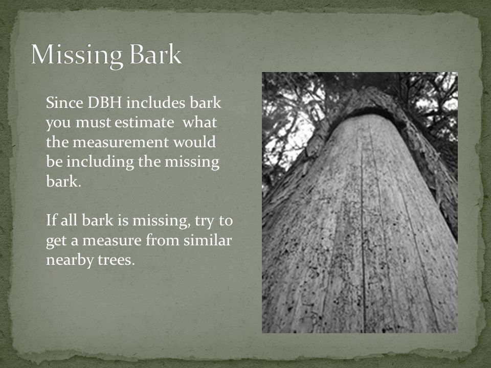 Since DBH includes bark you must estimate what the measurement would be including the missing bark.