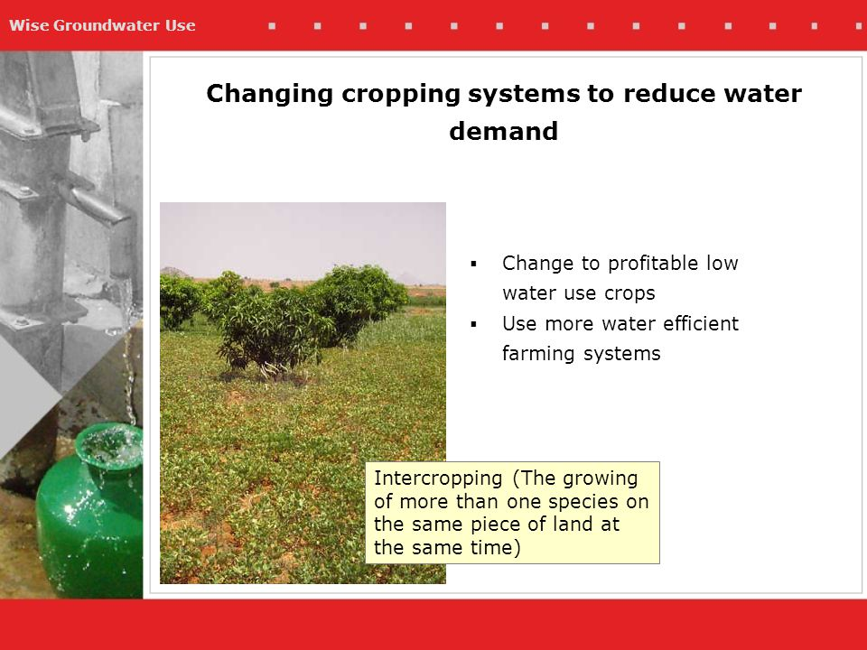 Wise Groundwater Use Changing cropping systems to reduce water demand  Change to profitable low water use crops  Use more water efficient farming systems Intercropping (The growing of more than one species on the same piece of land at the same time)