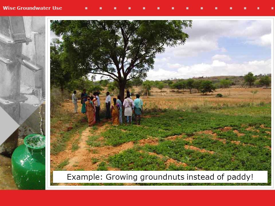 Wise Groundwater Use Example: Growing groundnuts instead of paddy!