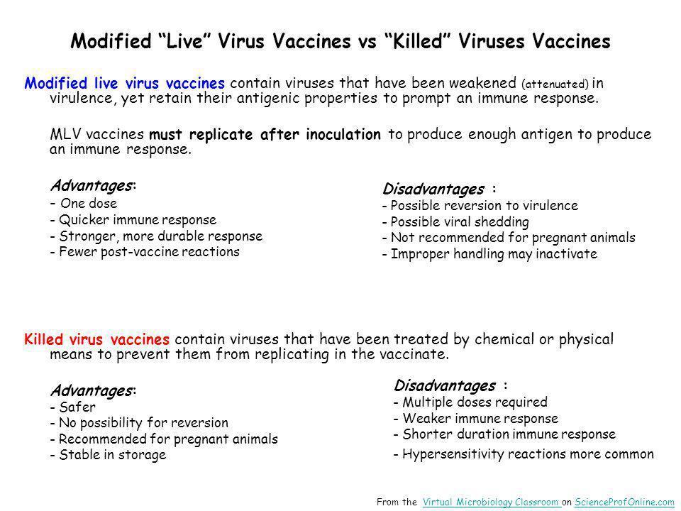 "Modified ""Live"" Virus Vaccines vs ""Killed"" Viruses Vaccines Modified live virus vaccines contain viruses that have been weakened (attenuated) in virul"