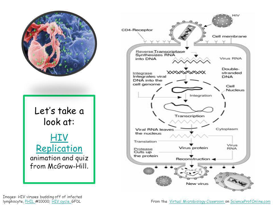 Images: HIV viruses budding off of infected lymphocyte, PHIL #10000; HIV cycle, GFDLPHIL HIV cycle, From the Virtual Microbiology Classroom on Science