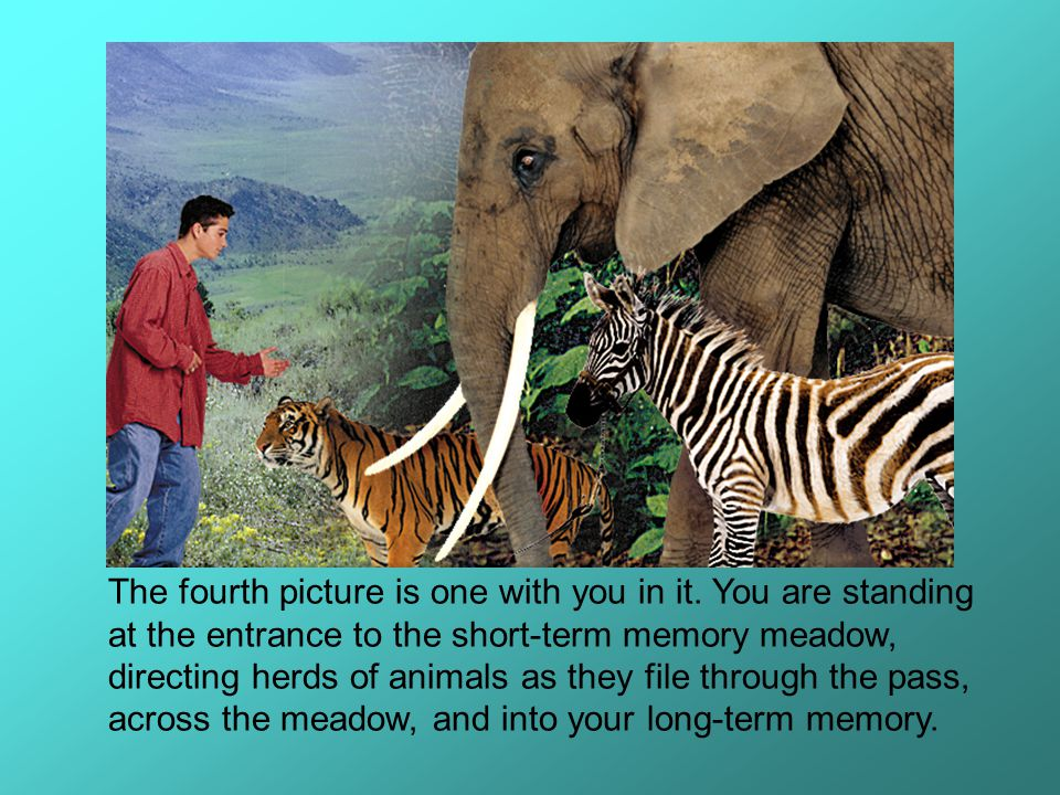 The fourth picture is one with you in it. You are standing at the entrance to the short-term memory meadow, directing herds of animals as they file th