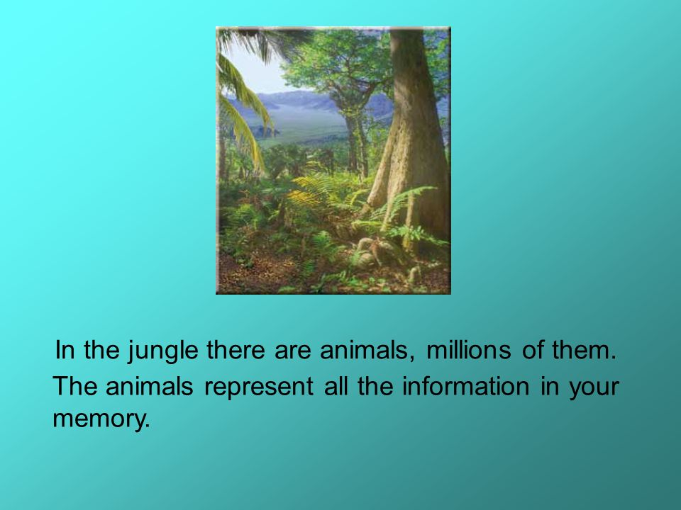 You are doing more than sitting on a rock and watching the animal traffic file into your brain.