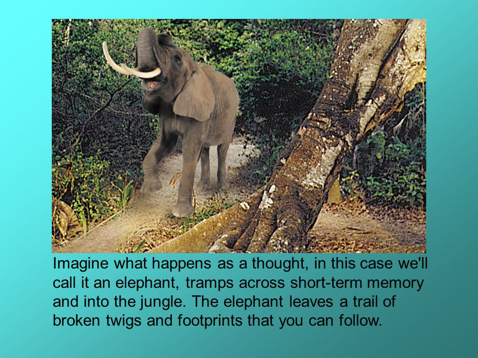 Imagine what happens as a thought, in this case we'll call it an elephant, tramps across short-term memory and into the jungle. The elephant leaves a