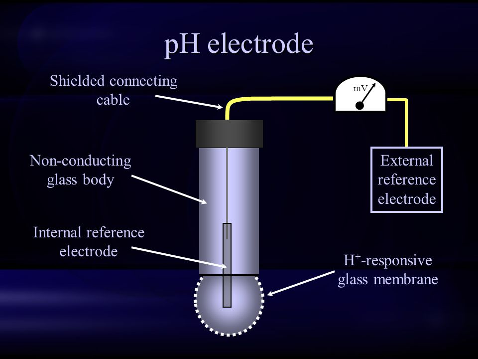 pH electrode mV External reference electrode Non-conducting glass body Internal reference electrode H + -responsive glass membrane Shielded connecting