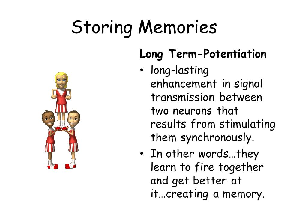 Storing Memories Long Term-Potentiation long-lasting enhancement in signal transmission between two neurons that results from stimulating them synchro