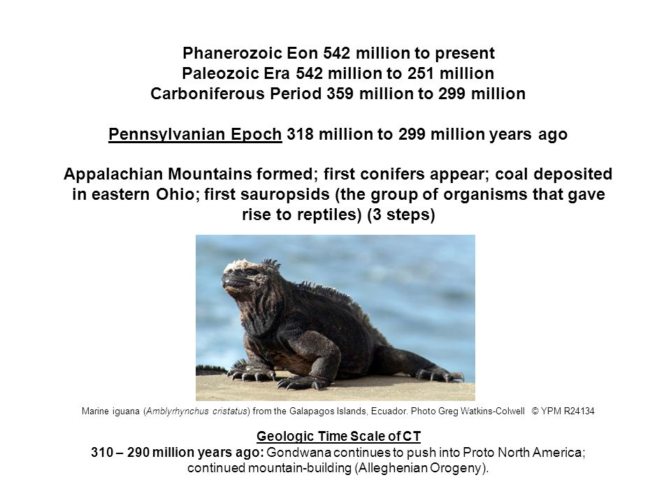 Phanerozoic Eon 542 million to present Paleozoic Era 542 million to 251 million Permian Period 299 million to 251 million years ago Synapsids, a group of animals that included the ancestors of mammals, flourished in the Permian Period.