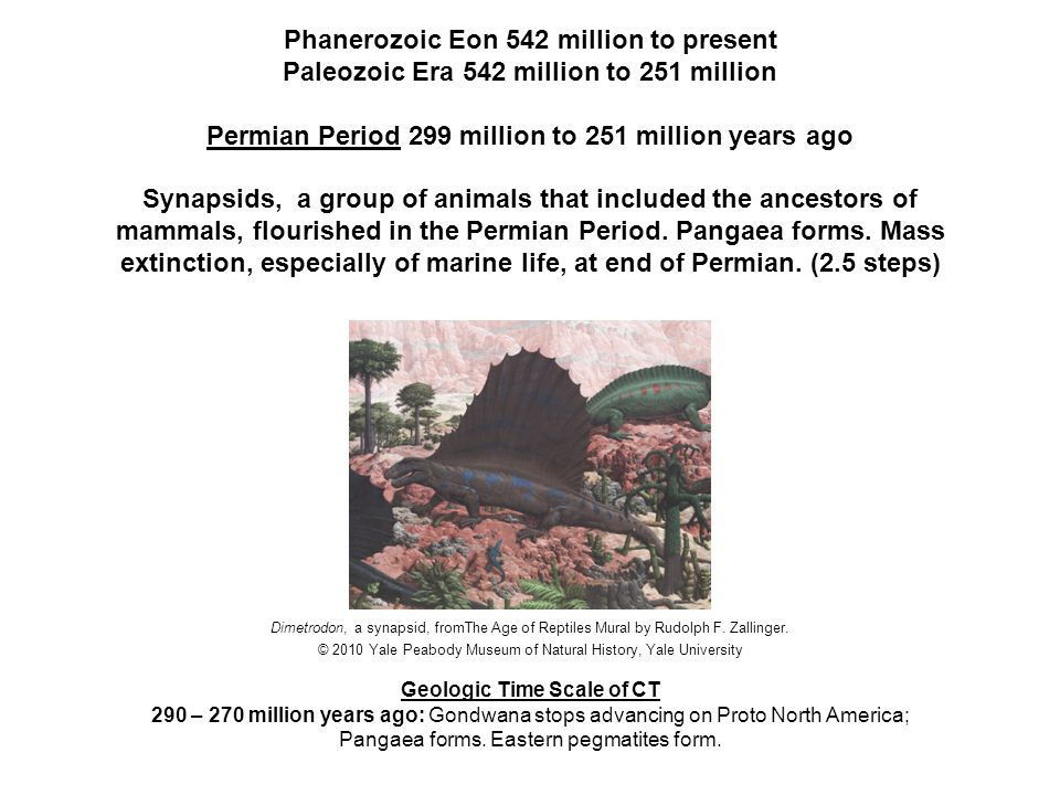 Phanerozoic Eon 542 million to present Mesozoic Era 251 million to 65.5 million Triassic Period 251 million to 201.6 million years ago Life takes tens of millions of years to recover from the Permian-Triassic extinction.