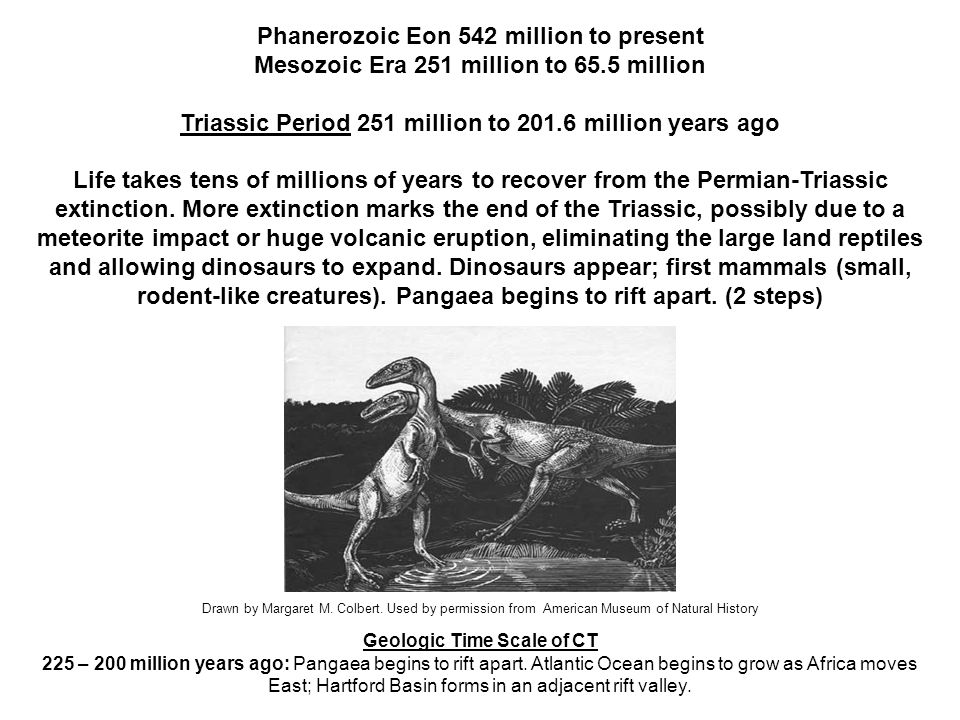 Phanerozoic Eon 542 million to present Mesozoic Era 251 million to 65.5 million Jurassic Period 201.6 million to 145.5 million years ago Dinosaurs dominate; flying reptiles appear; first known bird (1.5 steps) Geologic Time Scale of CT 200 – 145 million years ago: Atlantic Ocean continues to widen; Hartford Basin stops rifting; Newark Terrane forms (brownstone, sandstone, traprock) Left: Apatosaurus and Stegosaurus, two of the most iconic dinosaurs of the Jurassic Period.