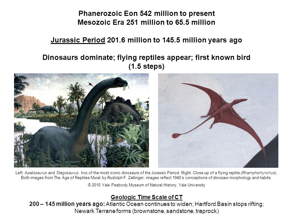 Phanerozoic Eon 542 million to present Mesozoic Era 251 million to 65.5 million Cretaceous Period 145.5 million to 65.5 million years ago First snakes; first grasses and flowering plants appear; mass extinction of dinosaurs about 65 million years ago (.6 steps) Pacific boa (Candoia carinata).