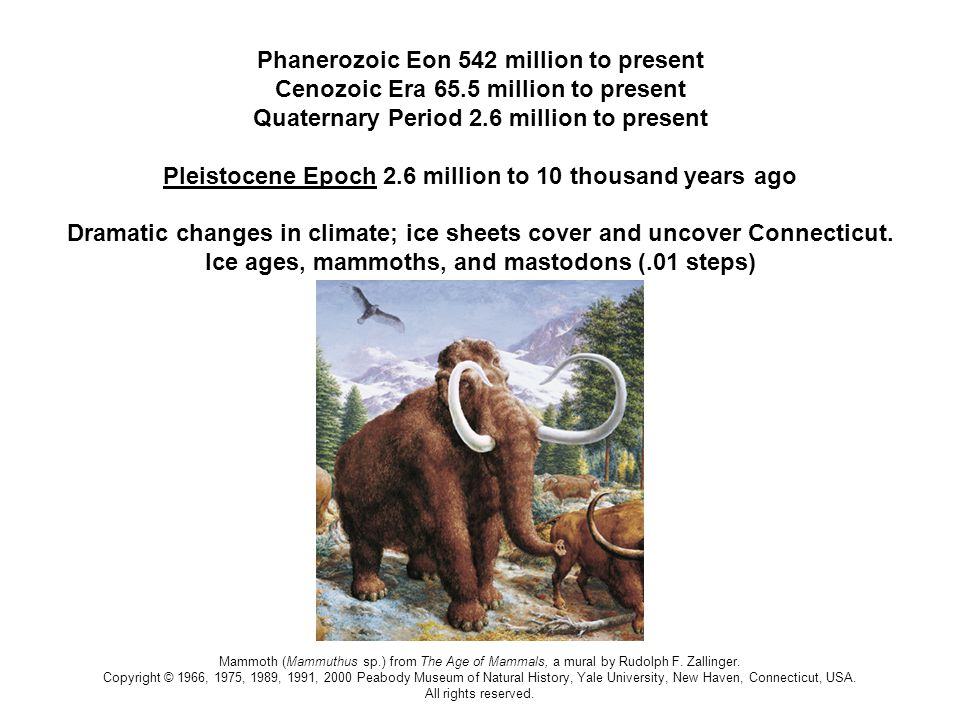 © YPM; Neanderthal sculpture by Michael Anderson Phanerozoic Eon 542 million to present Cenozoic Era 65.5 million to present Quaternary Period 2.6 million to present Pleistocene Epoch 2.6 million to 10 thousand years ago Neanderthals (Homo neanderthalensis) existed at least 300,000 years ago and went extinct about 30,000 years ago.