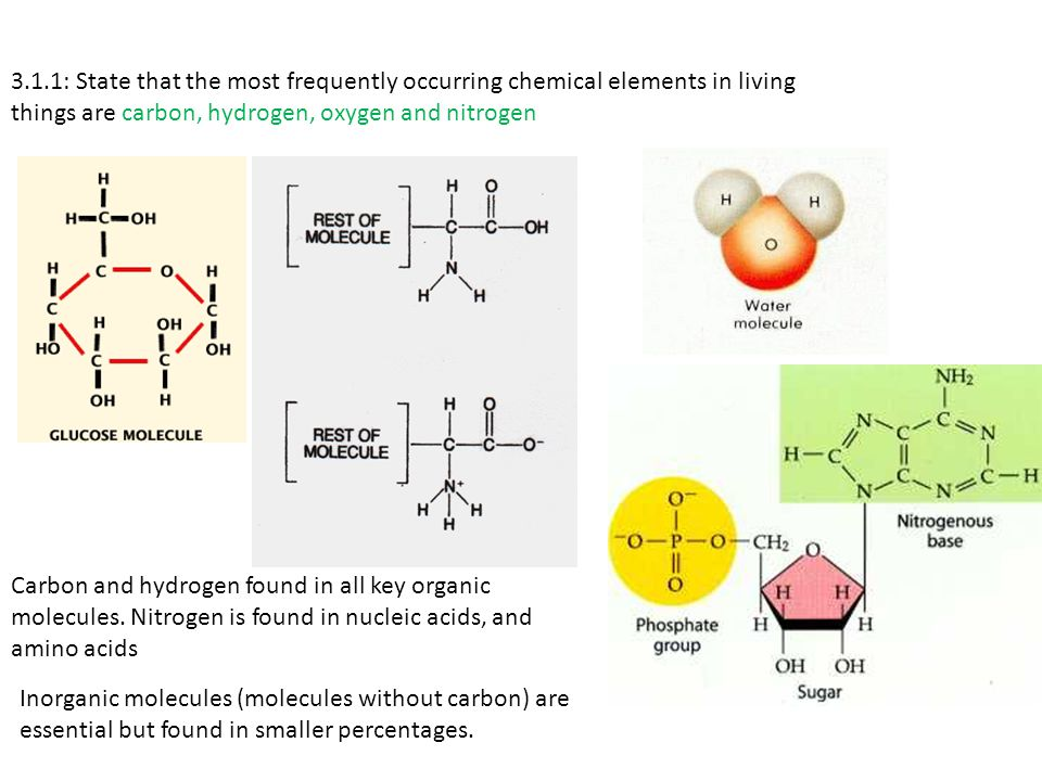 3.1.1: State that the most frequently occurring chemical elements in living things are carbon, hydrogen, oxygen and nitrogen Carbon and hydrogen found