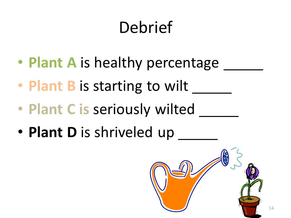 Debrief Plant A is healthy percentage _____ Plant B is starting to wilt _____ Plant C is seriously wilted _____ Plant D is shriveled up _____ 14