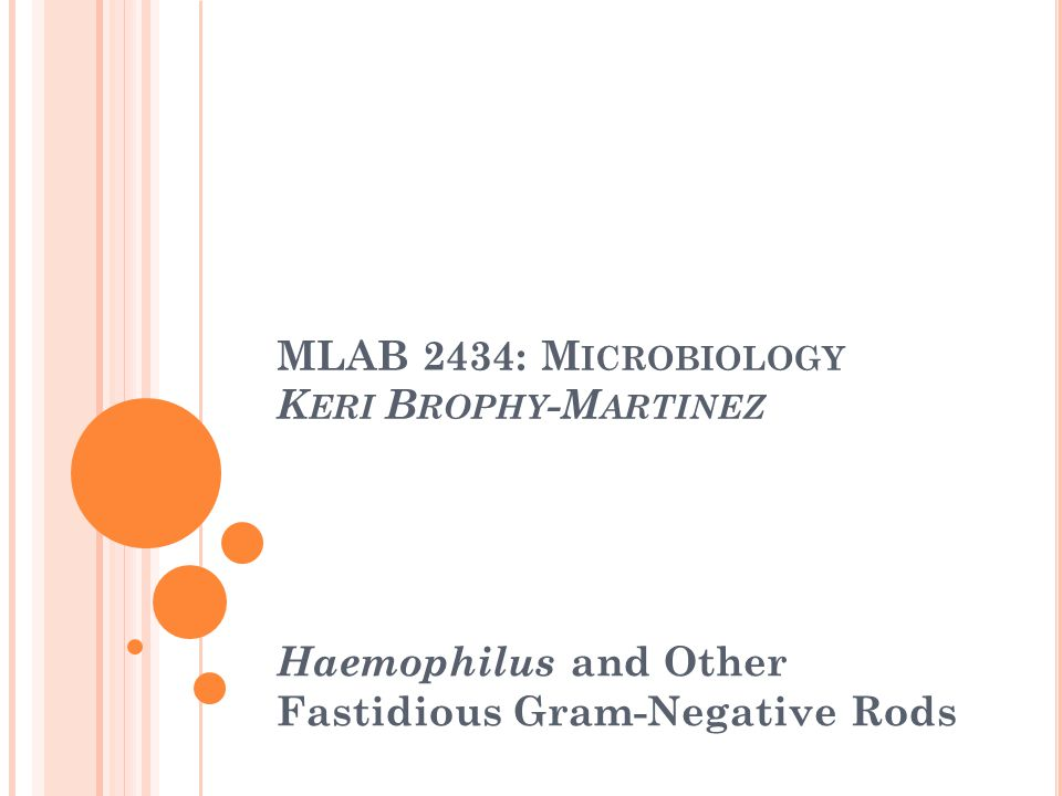 H AEMOPHILUS S PECIES Colony Morphology No growth on BAP or MAC On CA: semi-opaque, gray-white, convex, mucoid.