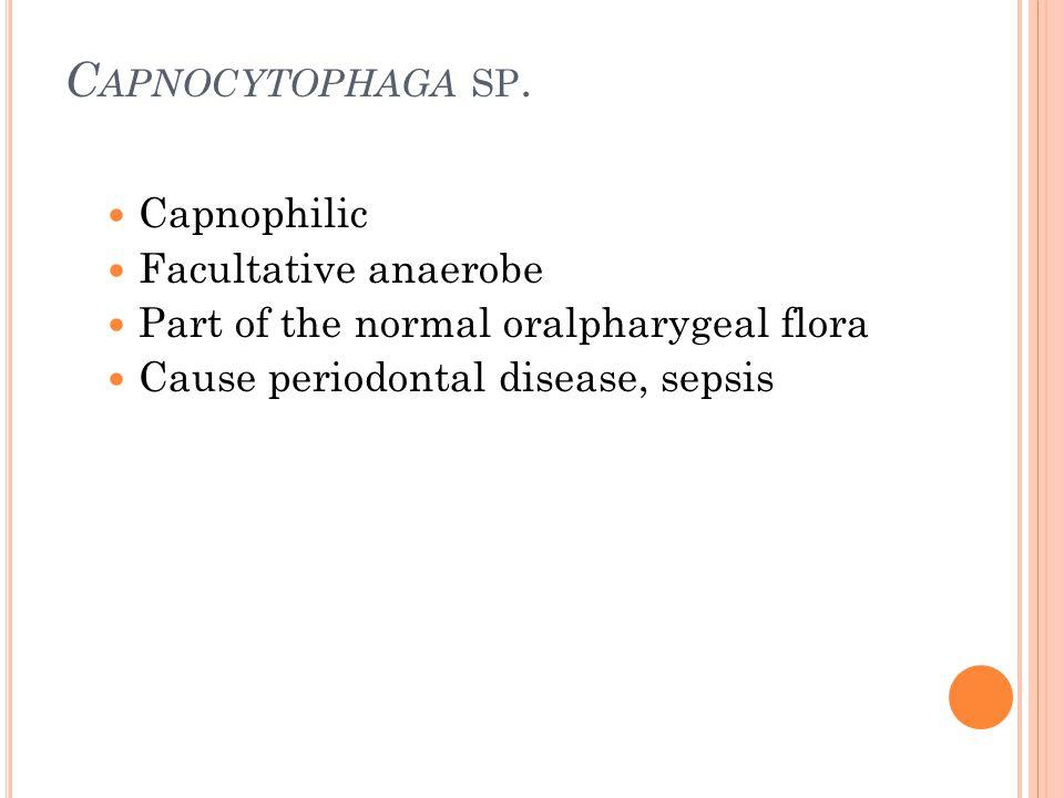 C APNOCYTOPHAGA SP. Capnophilic Facultative anaerobe Part of the normal oralpharygeal flora Cause periodontal disease, sepsis