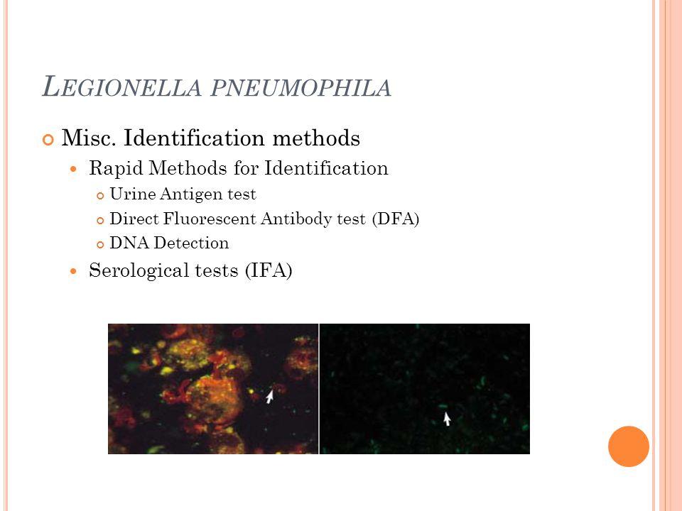 L EGIONELLA PNEUMOPHILA Misc. Identification methods Rapid Methods for Identification Urine Antigen test Direct Fluorescent Antibody test (DFA) DNA De