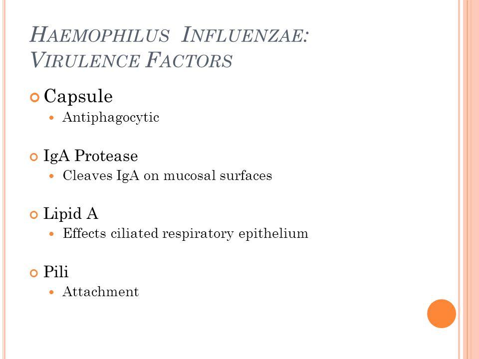 H AEMOPHILUS I NFLUENZAE : V IRULENCE F ACTORS Capsule Antiphagocytic IgA Protease Cleaves IgA on mucosal surfaces Lipid A Effects ciliated respirator