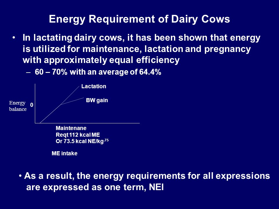 Energy Requirement of Dairy Cows In lactating dairy cows, it has been shown that energy is utilized for maintenance, lactation and pregnancy with appr