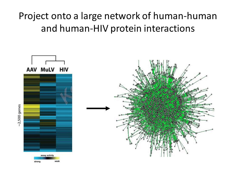 Project onto a large network of human-human and human-HIV protein interactions