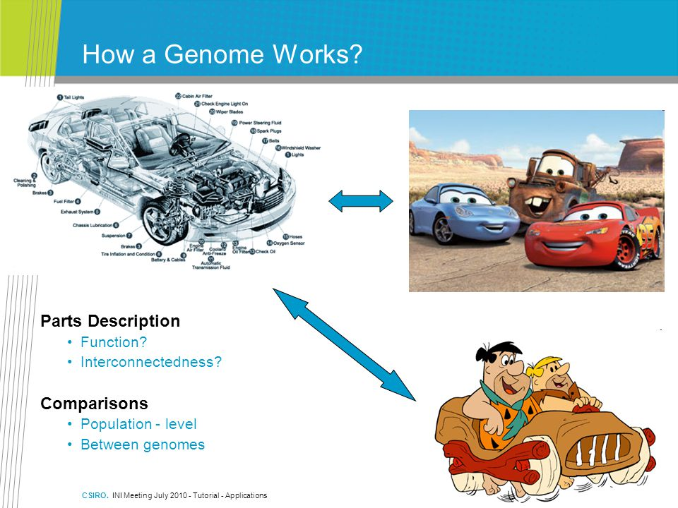 CSIRO.INI Meeting July 2010 - Tutorial - Applications How a Genome Works.