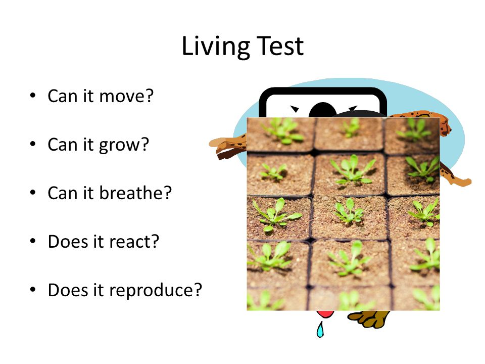 Living Test Can it move Can it grow Can it breathe Does it react Does it reproduce