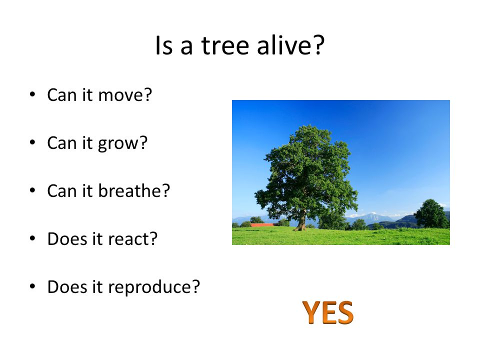 Is a tree alive Can it move Can it grow Can it breathe Does it react Does it reproduce