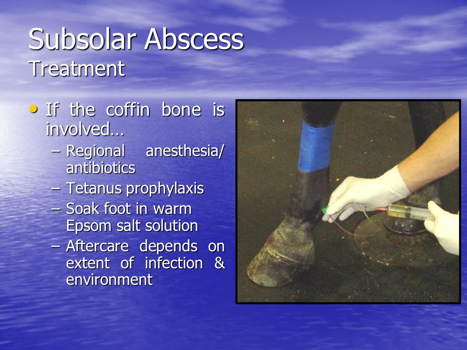 Subsolar Abscess Treatment If the coffin bone is involved… If the coffin bone is involved… –Regional anesthesia/ antibiotics –Tetanus prophylaxis –Soak foot in warm Epsom salt solution –Aftercare depends on extent of infection & environment