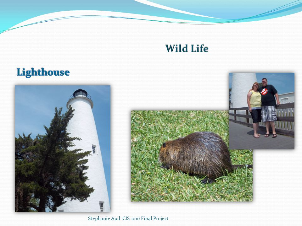 Lighthouse Wild Life Stephanie Aud CIS 1010 Final Project