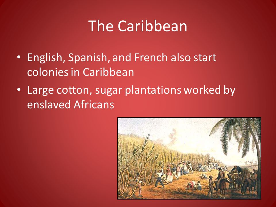 The Caribbean English, Spanish, and French also start colonies in Caribbean Large cotton, sugar plantations worked by enslaved Africans
